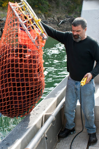 the connoisseurs guide to fish seafood